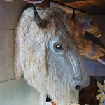 White Buffalo Head used in 2002 Olympic Ceremonies