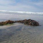 Plenty of seaweed was washing up