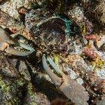 Molasses Reef Foto