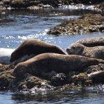 Seals in the Broken Group Islands, Pacific Rim National Park