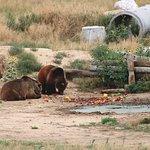 Bears at dinner time