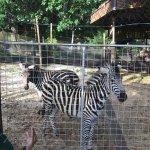 Photo of Emperor Valley Zoo