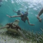 Snorke with Sea Turtles