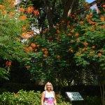 butterfly garden area