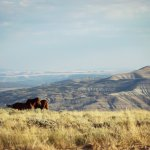 Two horses among a stunning Wyoming backdrop