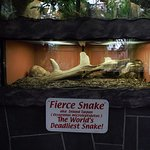 at reptile gardens. they had one.! actually two i think