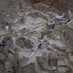 Mammoth site bones