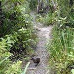 Bush Track With Weka