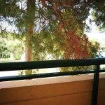 trees views!