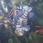 Photo de L'Aquarium de Barcelona
