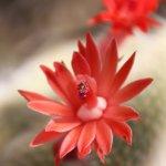 Photo de Zurich Succulent Plant Collection