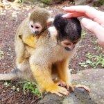 Photo of Izu Shaboten Animal Park