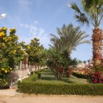 Photo de Desert Rose Resort
