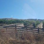 Sonoma Valley Foto