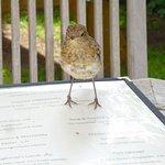 Sparrow on menu