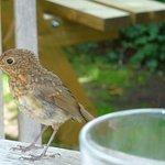 Sparrow on table