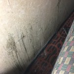 Mold behind the couch and on the wall