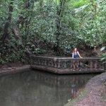 Along the upper walking trail