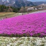 Hitsujiyama Park Image
