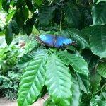 Photo of La Serre aux Papillons