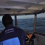 Buscando cetáceos