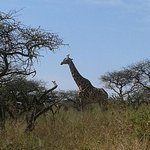 Photo of Tala Private Game Reserve