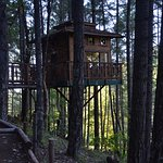 Shitake Treehouse and its access