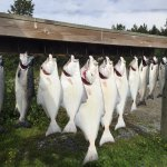 Alaska Fishing & Lodging 사진