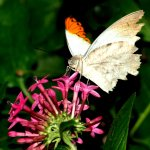 Foto di The Butterfly Place