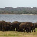Elephants by the reservoir