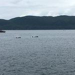 Orcas from 101 yards away!