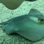 Ecco il bell'acquario dell'Elba
