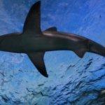 Shark tank above!