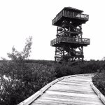 Overlook tower, and the boardwalk towards it.
