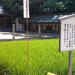 Having a sacred rice field shows the Authenticity of the shrine.