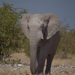 Photo of Etosha National Park