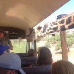 Feeding the Giraffes!
