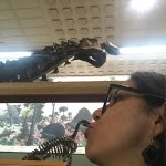 Photo of Yale Peabody Museum of Natural History