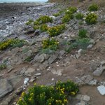 Rhossili Bay Foto