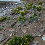Photo of Rhossili Bay
