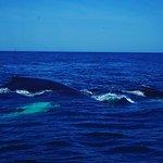 Foto de Dolphin Fleet Whale Watch