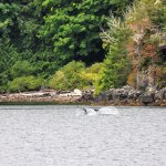 Whale Tale Waterfall Aug 17 Lady Rose Boat Tour