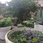 Bilde fra Hotel Garden