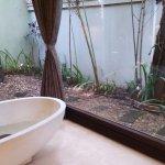 garden in the room