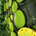 Photo of Royal Botanic Gardens Kew