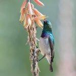 Photo de Divava Okavango Resort & Spa