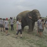The afternoon walk with some of the Elephants.