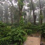 Foto de Machaan Wilderness Lodge Nagarahole