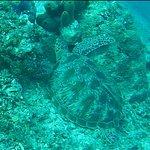 Photo of 7SEAS Dive Gili