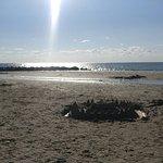 Zdjęcie Cape Charles Beach